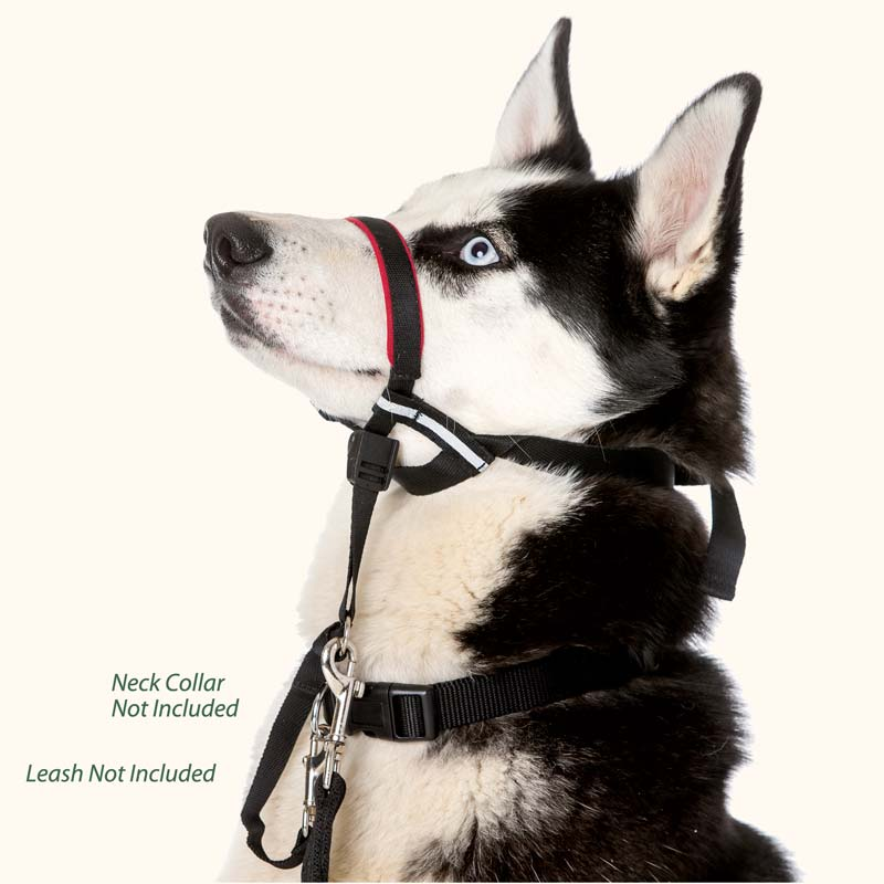 Best Head Collar For Dogs